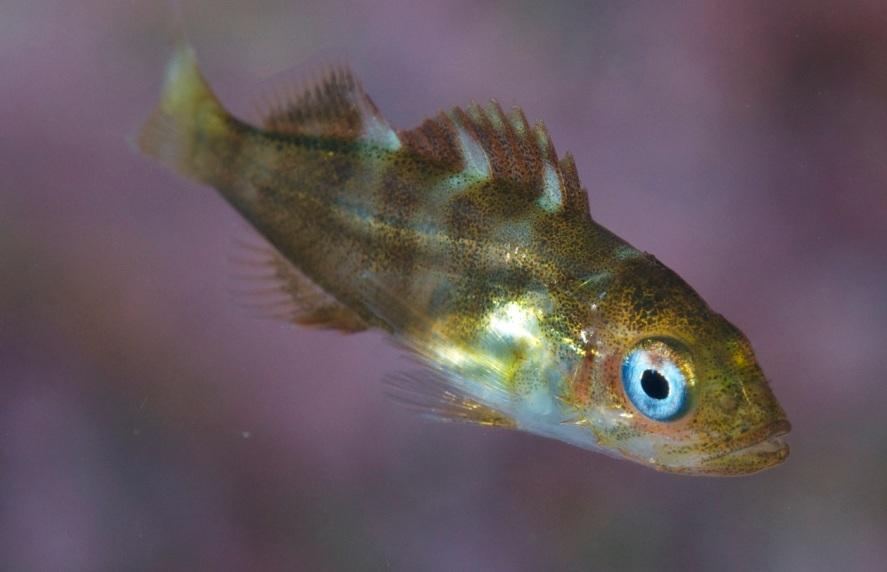 HaidaGwaii Kelp 7_11 -⌐MarkWunsch033
