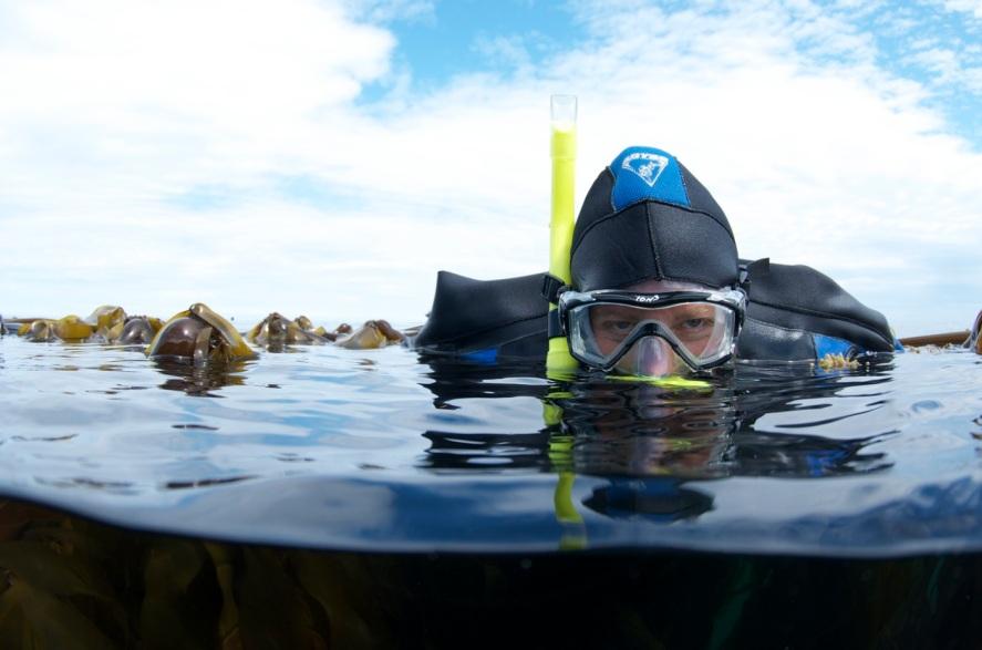 HaidaGwaii Kelp 7_11 -⌐MarkWunsch046