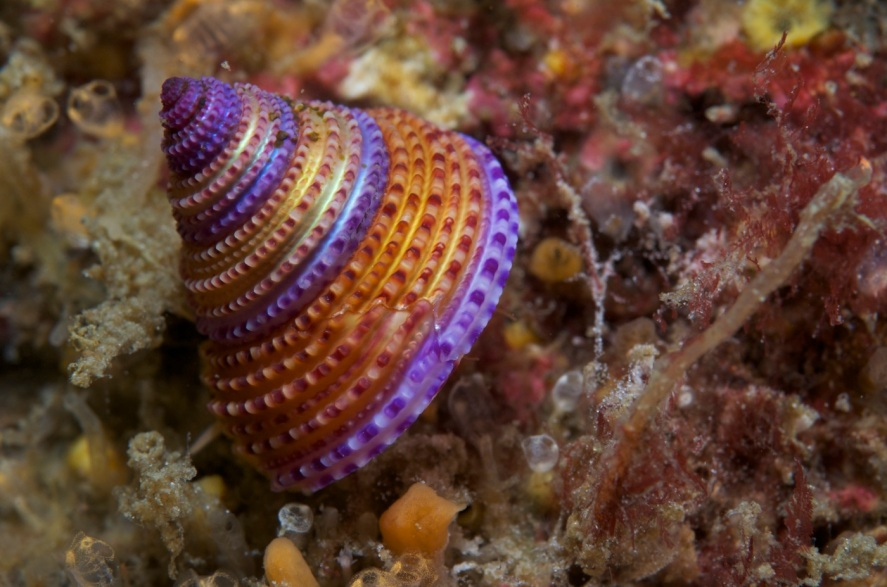 HaidaGwaii Kelp 7_11 -⌐MarkWunsch084